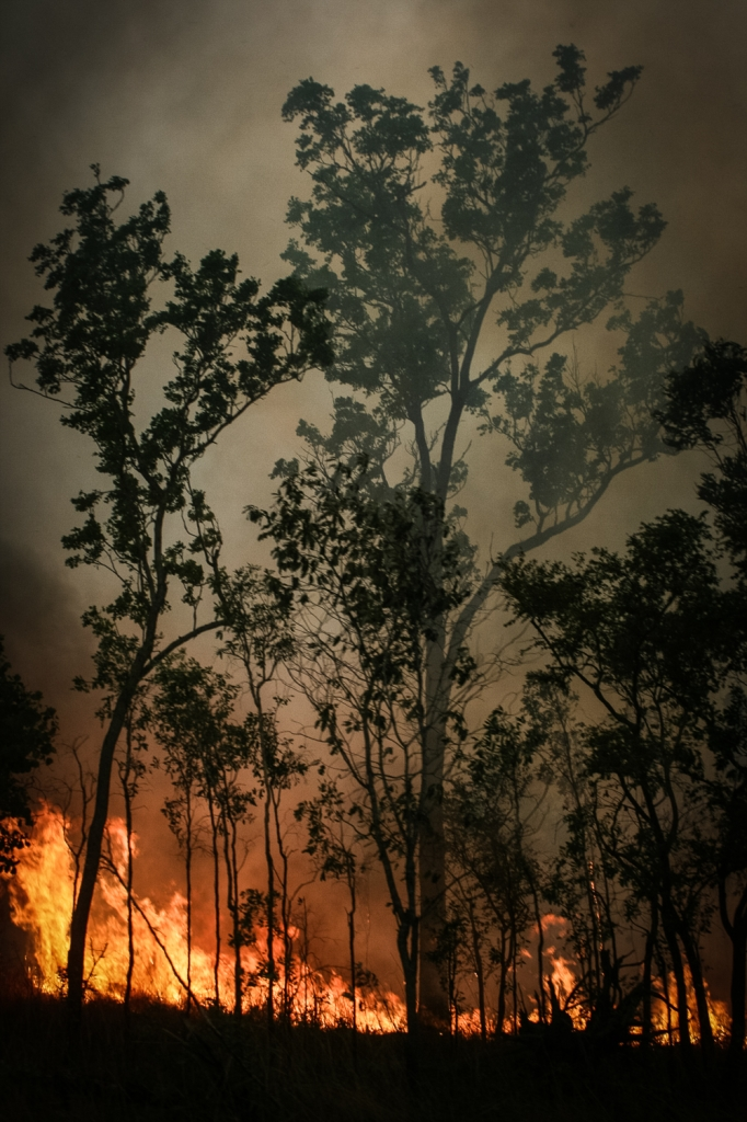 wildfire, australia, northern territory, fire, forest, nature, bush