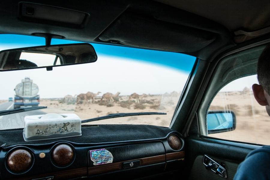 western sahara, morocco, africa, camles, sahara, cab